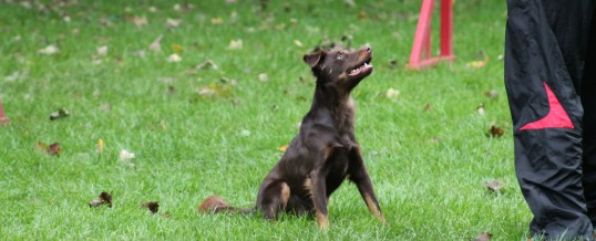 Agility-Training vom 18.10.2015