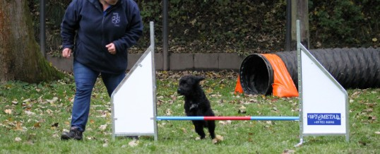 Agility-Training vom 25.10.2015
