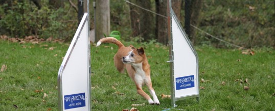 Agility-Training vom 08.11.2015
